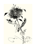 Studies in Ink - Rose I Prints by Nan Rae