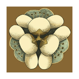 Small Floral Mandala on Caramel I Posters by Erica J. Vess