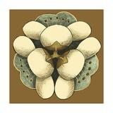 Small Floral Mandala on Caramel I Premium Giclee Print by Erica J. Vess