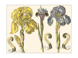 Custom Iris in Bloom I Posters by  Langlois