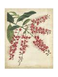 Tropical Floral III Art by  Edmonston & Douglas