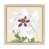 Small Peony Collection IV Premium Giclee Print by  Vision Studio