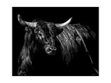 Brindle Rodeo Bull Print by Julie Chapman