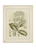 Small Tinted Botanical III Premium Giclee Print by Samuel Curtis