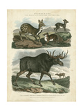 Deer and Moose Prints by Sydenham Teast Edwards