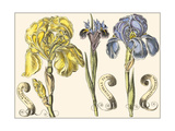 Small Iris in Bloom I Posters by  Langlois