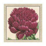 Small Peony Collection V Premium Giclee Print by  Vision Studio