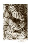Garden Textures IV Premium Giclee Print by Laura Denardo