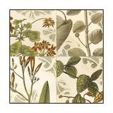 Small Botanical Quadrant I Premium Giclee Print by  Vision Studio
