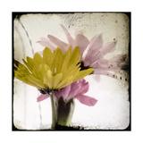 Summer Memory I Premium Giclee Print by Ingrid Blixt