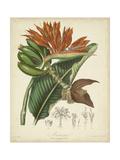 Twining Botanicals III Pôsters por Elizabeth Twining