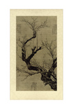 Plum Blossom Tree Posters