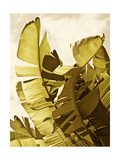 Palm Fronds II Prints by Rachel Perry