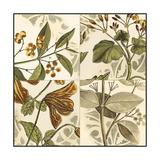 Small Botanical Quadrant II Premium Giclee Print by  Vision Studio