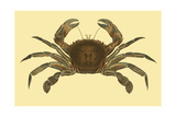 Antique Crab II Prints