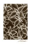 Garden Textures III Premium Giclee Print by Laura Denardo