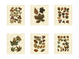 Lodge Leaf Collection Prints