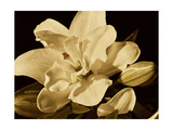 Yvoire Flower I Premium Giclee Print by Rachel Perry