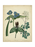 Cottage Florals V Posters by Sydenham Teast Edwards