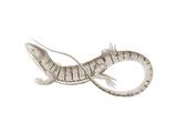 Sepia Lizard I Prints