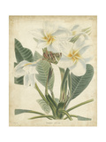 Tropical Floral II Prints by  Edmonston & Douglas