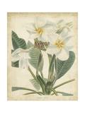 Tropical Floral II Giclee Print by  Edmonston & Douglas