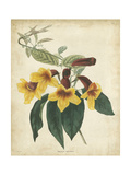 Tropical Floral VI Print by  Edmonston & Douglas