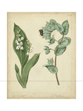 Cottage Florals IV Prints by Sydenham Teast Edwards