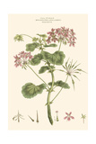 Small Blushing Pink Florals IV Posters by John Miller