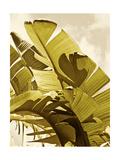 Palm Fronds I Posters par Rachel Perry
