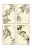 Woodblock Oriental Birds Posters