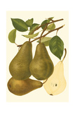 Pear Varieties IV Prints by  Vision Studio