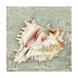 Weathered Shells III Premium Giclee Print by Kate Ward Thacker