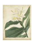 Tropical Floral IV Posters by  Edmonston & Douglas