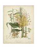 Twining Botanicals VII Poster af Elizabeth Twining