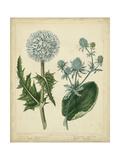 Cottage Florals III Poster von Sydenham Teast Edwards