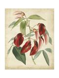 Tropical Floral I Posters by  Edmonston & Douglas