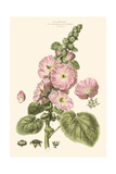Small Blushing Pink Florals V Prints by John Miller