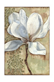 Magnolia Majesty I Poster von Jennifer Goldberger