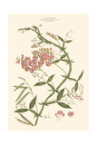 Small Blushing Pink Florals VI Posters by John Miller
