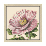 Small Peony Collection II Posters by  Vision Studio