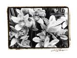 Striking Orchids III Kunstdruck von Laura Denardo
