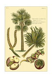 Printed Exotic Palm I Prints by Pierre Joseph Buchoz