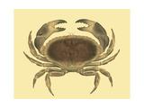 Antique Crab IV Poster af James Sowerby
