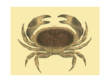 Antique Crab IV Poster