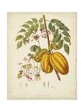 Twining Botanicals V Posters af Elizabeth Twining