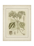 Small Tinted Botanical IV Prints by Samuel Curtis