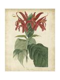 Tropical Floral V Prints by  Edmonston & Douglas