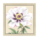 Small Peony Collection VI Premium Giclee Print by  Vision Studio