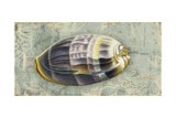 Weathered Shells IX 2-Up Premium Giclee Print by Kate Ward Thacker
